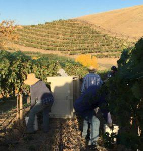 Tertulia Cellars elevation vineyard
