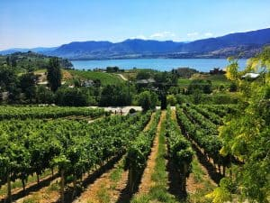 Things to do in Kelowna: Okanagan winery