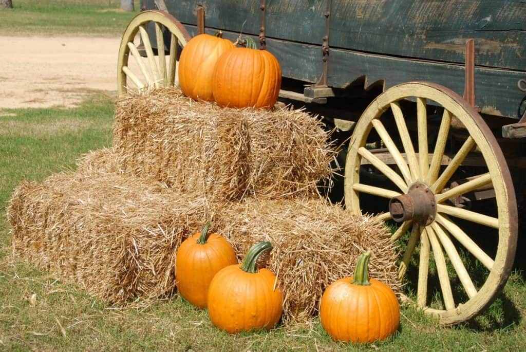 Fall in Washington: Pumpkin Patch