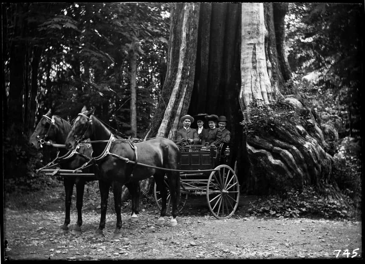 Old black and white photo of people in a horse-drawn buggy in front of a hollow tree in Stanley Park