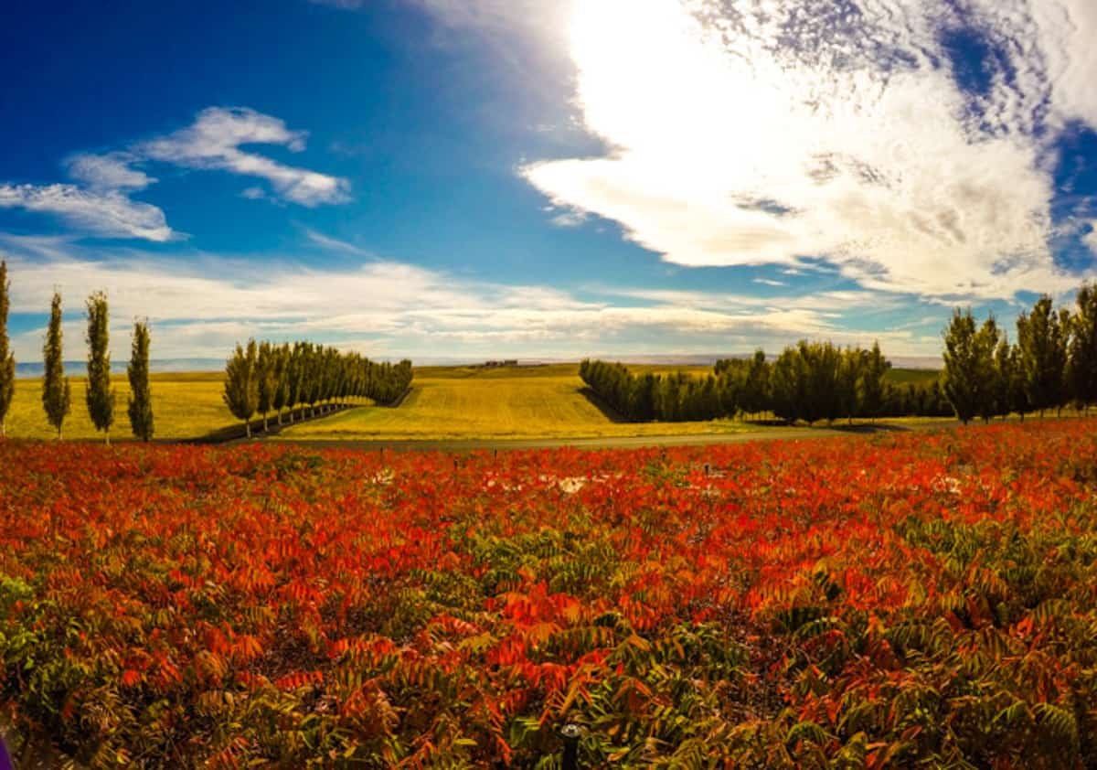 view of fields of red, yellow and green